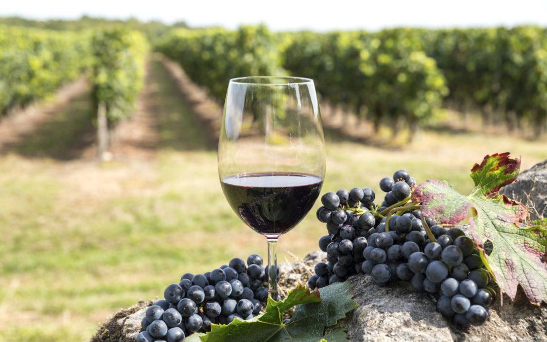 Clubs des Dirigeants de Nevers, Cosne et Clamecy, découvrez la filière viticole nivernaise